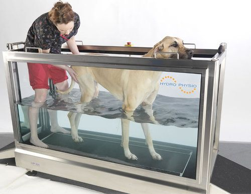 Dog undergoing hydrotherapy on a treadmill