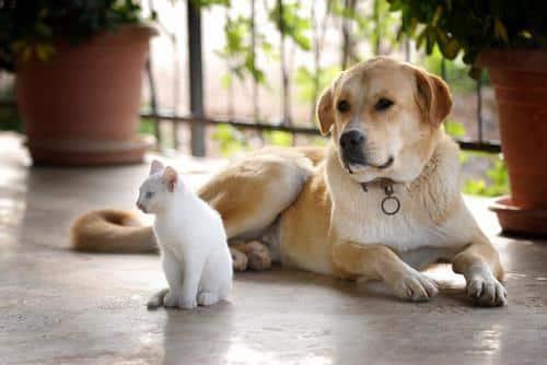 pet insurance arkansas