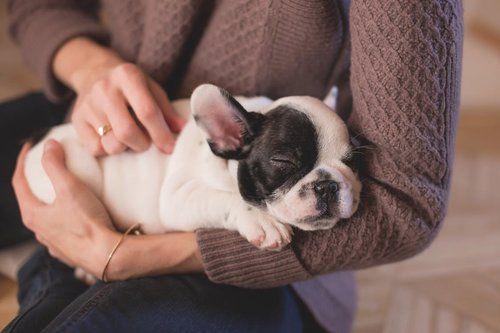 pet wellness assessment