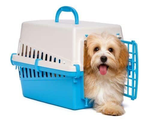 Small dog climbing out of a blue crate