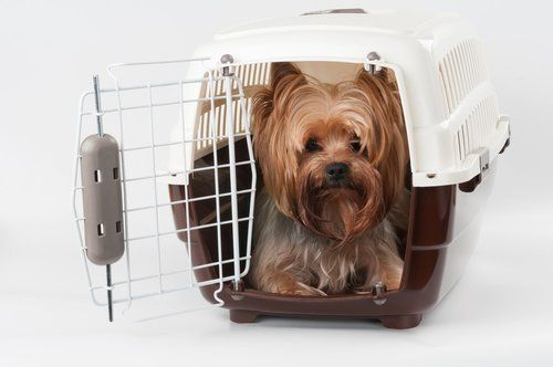 Smal terrier dogs sitting in a mobile crate