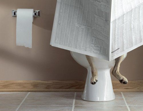 Dog reading newspaper on a toilet