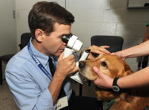 Dog being checked for Ectropion at the vet