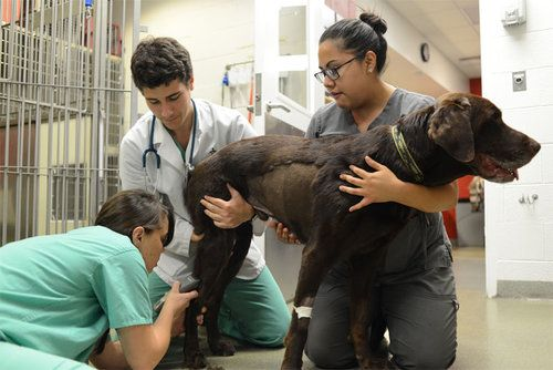 Dog being prepped for heart tests