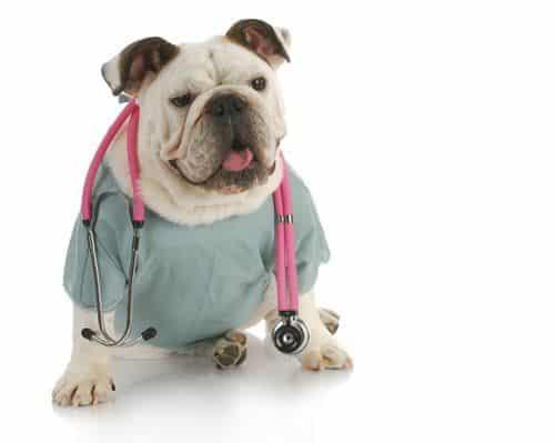 hyperpigmentation in dogs