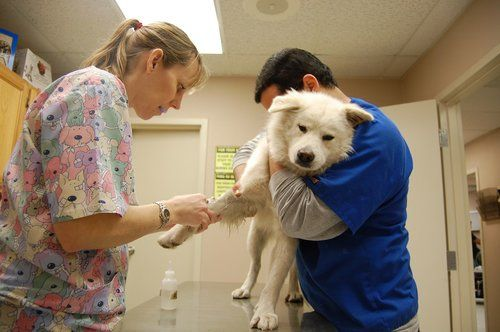 dog being treated at vet clinic