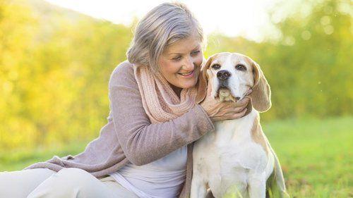 low cost pet insurance