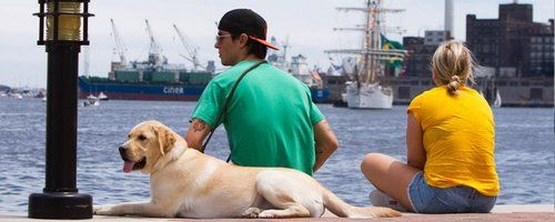 Dog with his owners relaxing in Baltimore's Inner Harbor