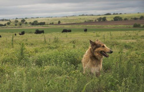 Dog sitting in a field in Oklahoma