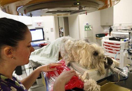 dog being treated in veterinary hospital