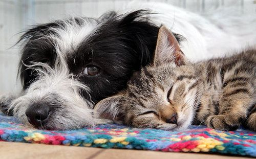 dog and cat napping together