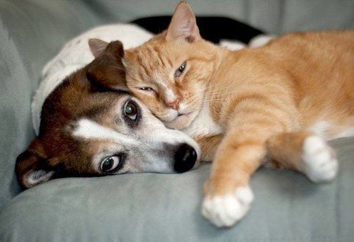 Dog and cat cozying up on a couch together