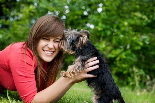 Woman getting a kiss from a Yorkshire Terrier