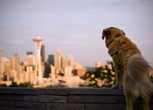 Dog overlooking Seattle skyline