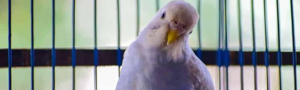 pet bird in cage