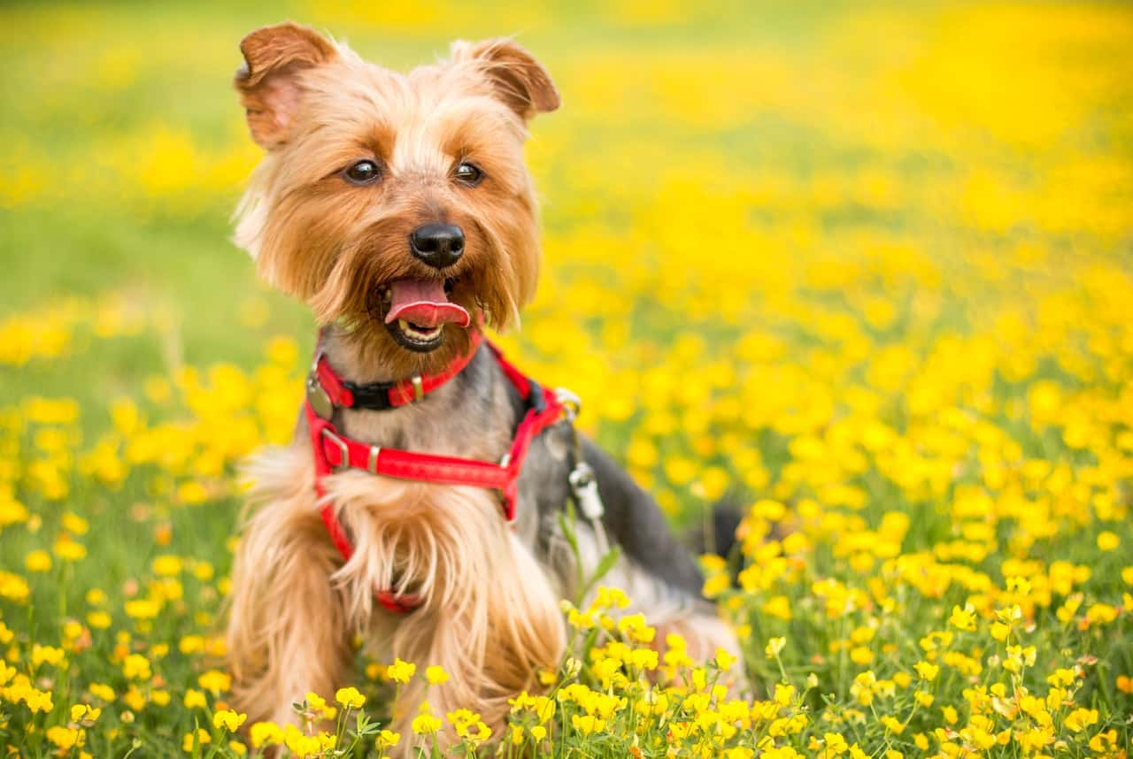 Small dog playing in a field