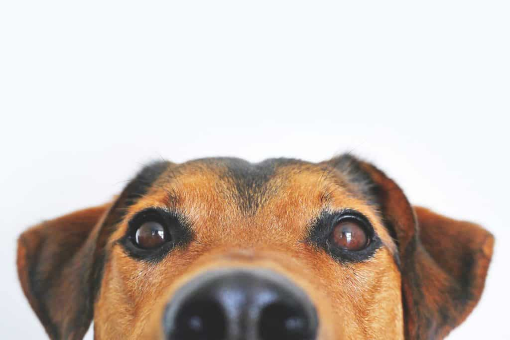A Guide About Folliculitis In Dogs | Pet Insurance Quotes