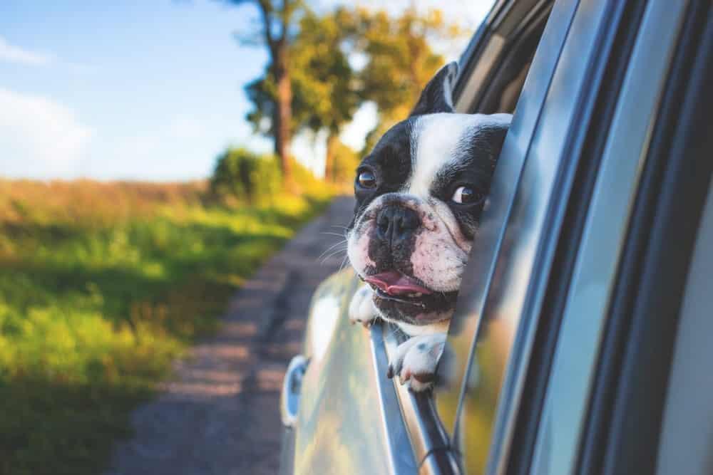 pet insurance vs car insurance