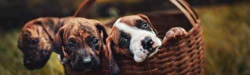 multi pet insurance plans