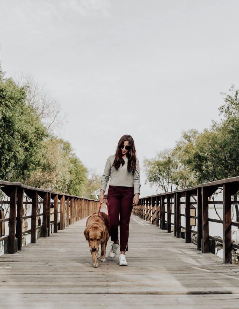 pet insurance facts