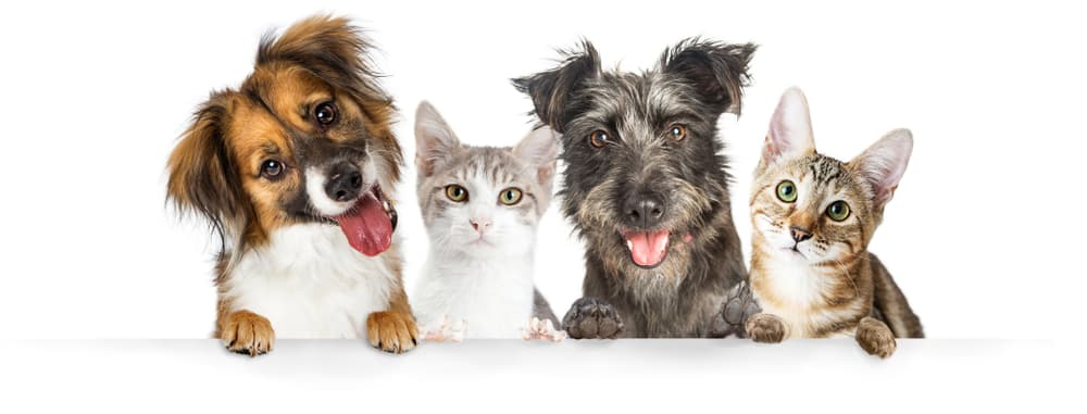 Pet Insurance Cost | How Much Can You Expect to Pay for ...