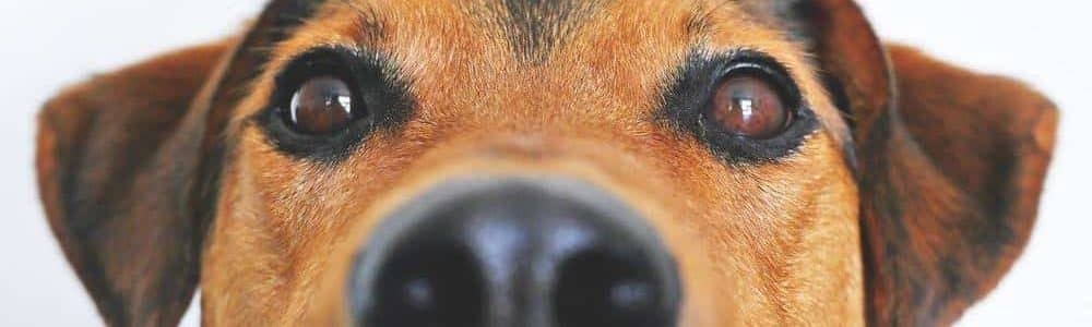 curious dog covered by the best pet insurance