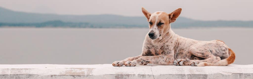 relaxing dog with pet insurance