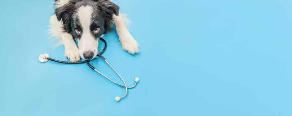 pet health insurance vs human health insurance
