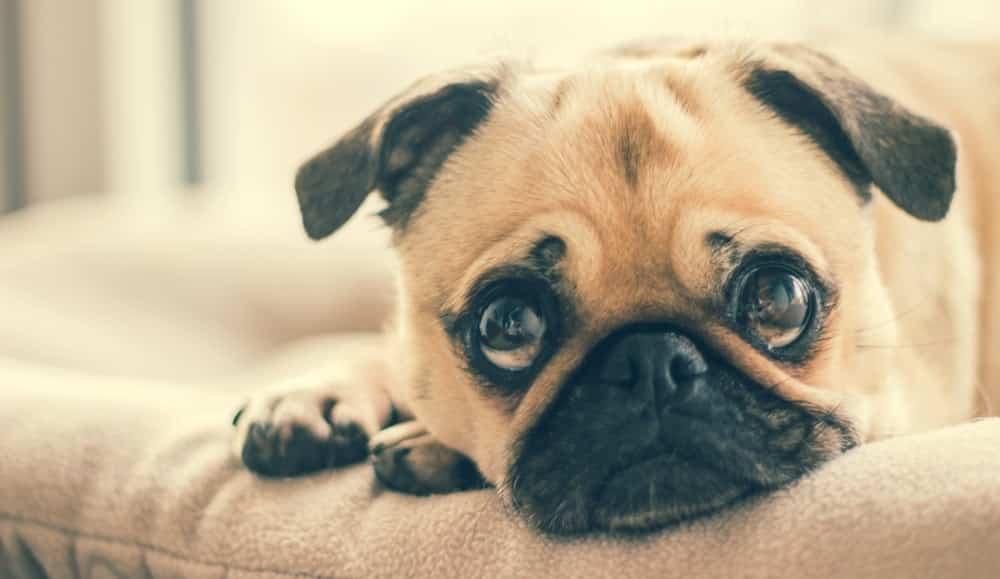 dog dental issues